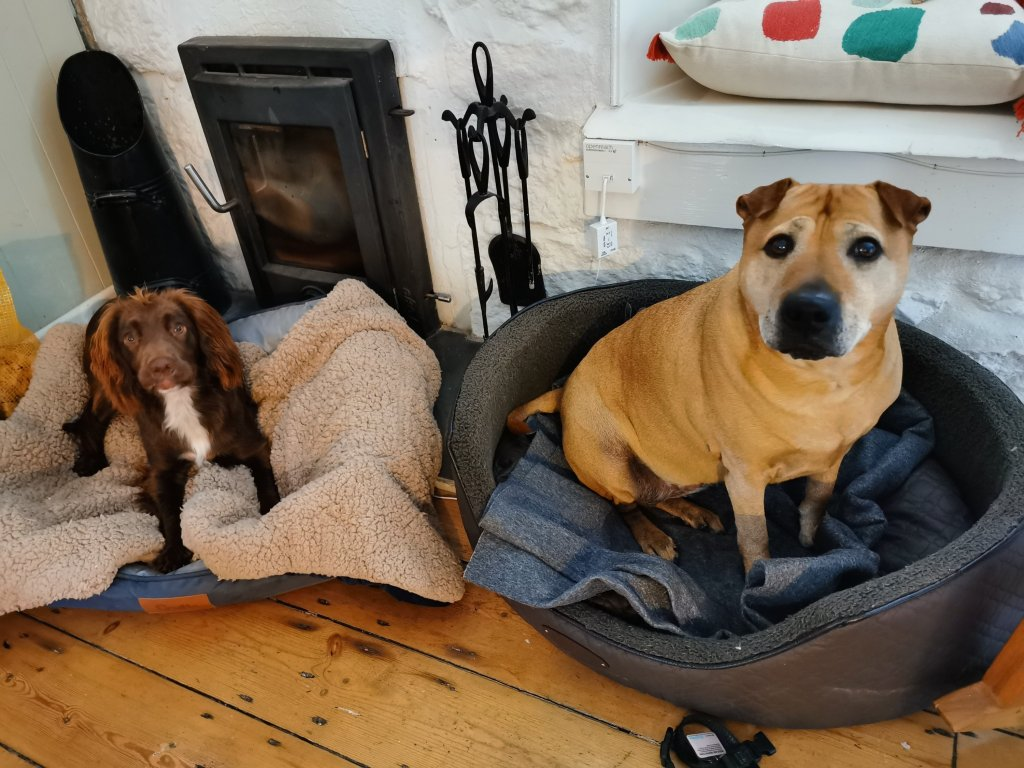 Dogs in dog-friendly Cornwall accommodation
