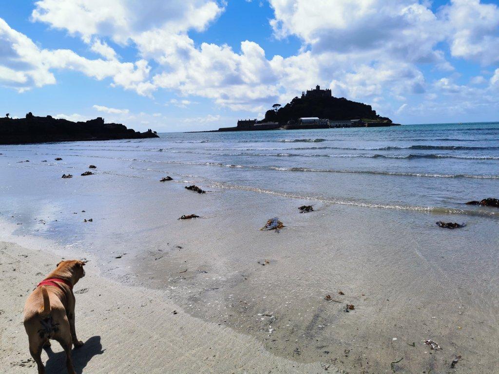 Dog on Marazion Beach
