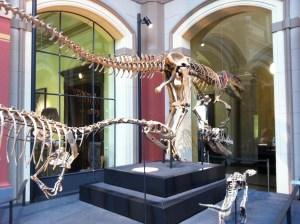 Museum für Naturkunde er et museum i Berlin, som også børn vil synes om. Især deres dinosaur-udstilling er mega spændende.