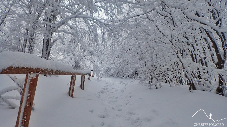 Zimowy szlak na Tarnicę