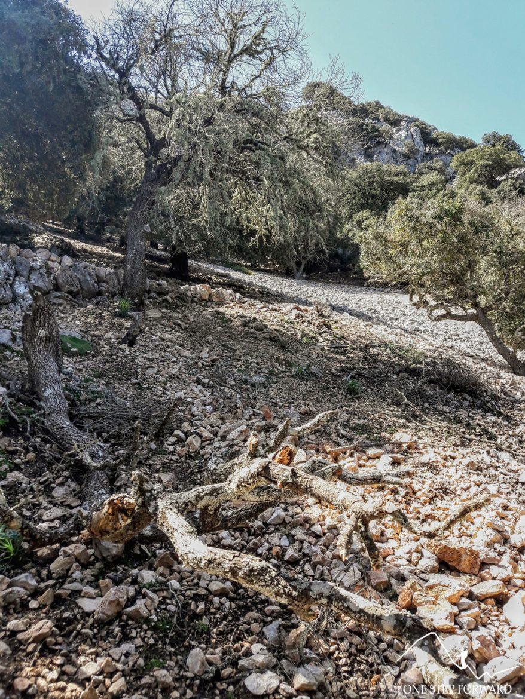 Początek szlaku na Puig d'en Galileu - Serra de Tramutanta, Majorka