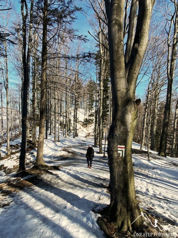 Skrzyżowanie szlaków przy Becyrku (862 m n.p.m.) - Beskid Śląski