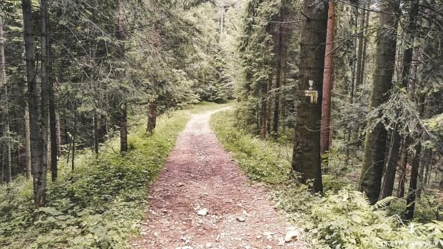 Żółty szlak zejściowy z Mogielicy - Beskid Wyspowy