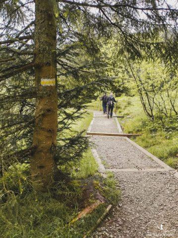 Żółty szlak na Olczyską Polanę z Nosalowej Przełęczy