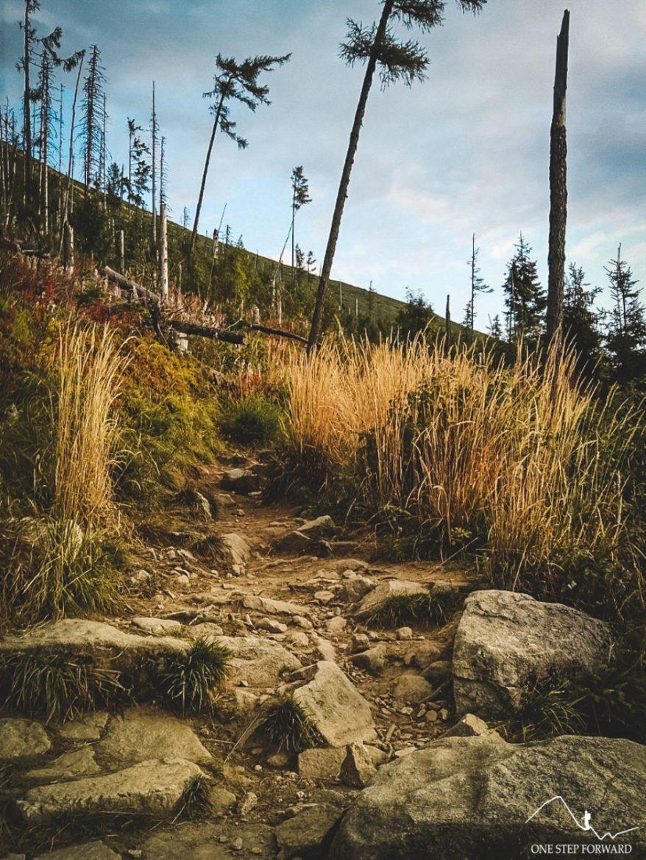 Niebieski szlak na Sławkowski Szczyt - kamienna ścieżka