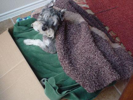critter_blanket2