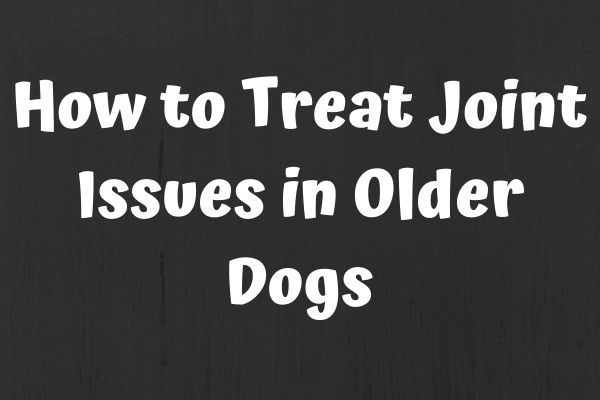 How to Treat Joint Issues in Older Dogs