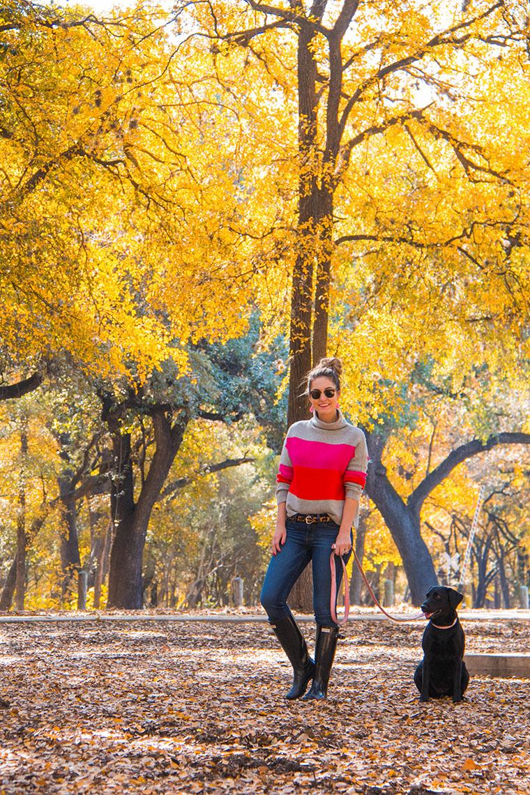 fall wonderland in San Antonio 2