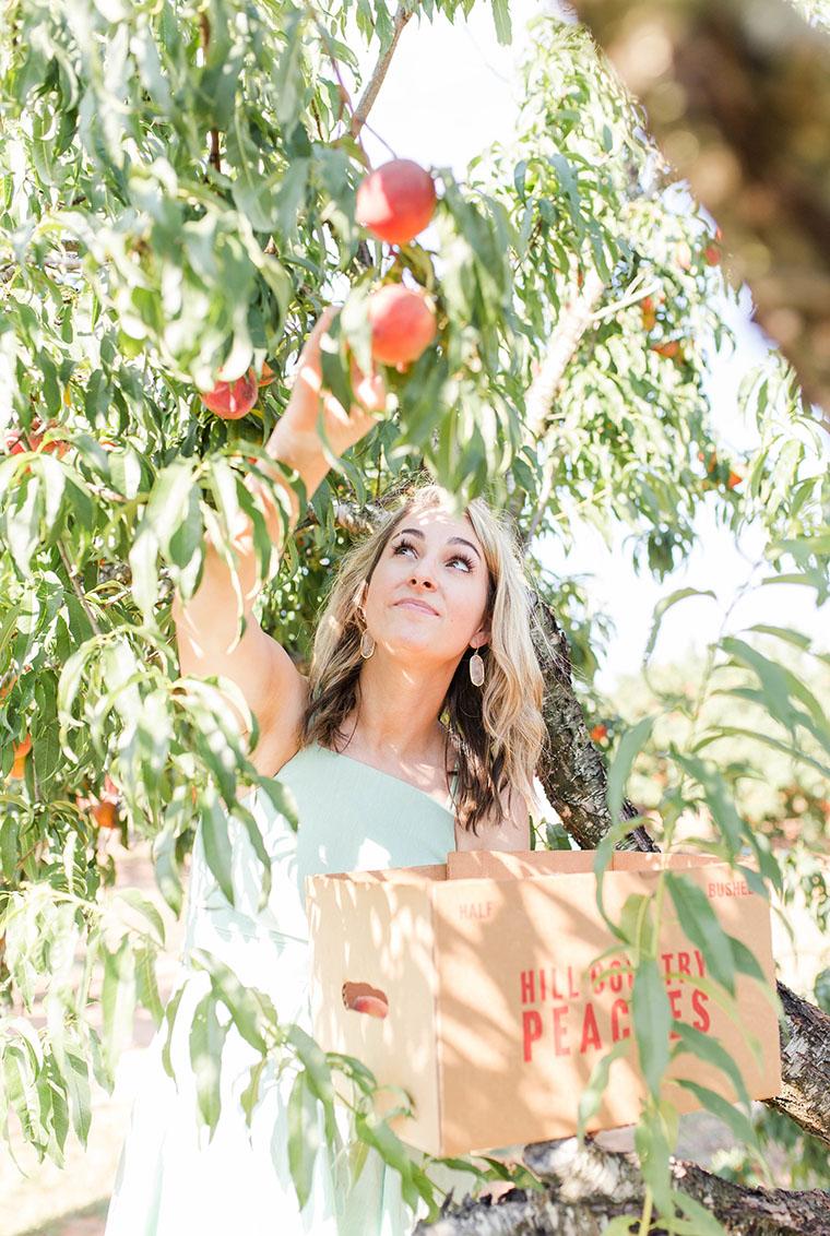 Peach Picking In Fredericksburg 15