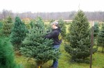 There are both cut-your-own and pre-cut trees available at Sells
