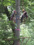 workers building one of the platforms high in the trees