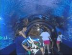 the acryilic walkway stretches 85 feet into the shark tank