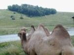 You never know what you are going to see along the roads in The Wilds