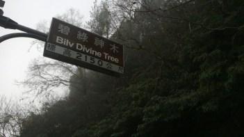 Bilv Divine Tree - 碧綠神木5