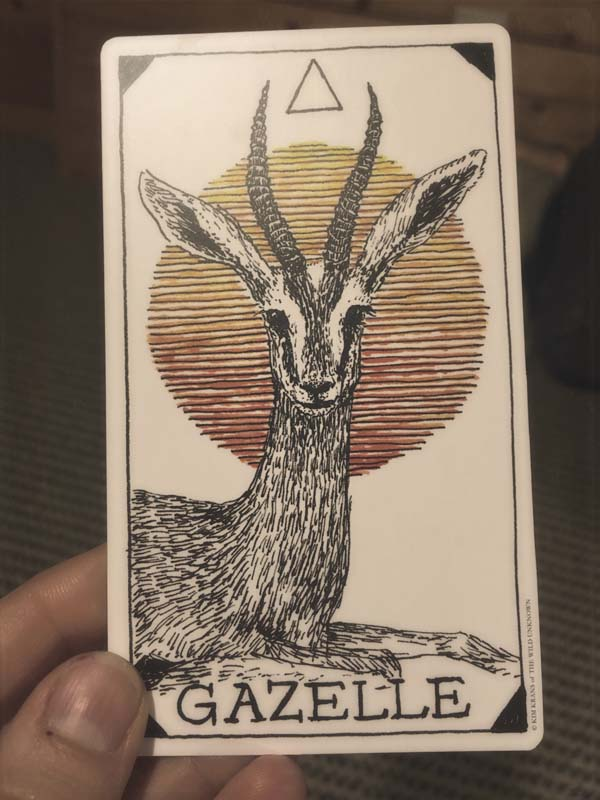 Drawing a card from the Wild Unknown Animal Spirit oracle deck. This gazelle kept me company while painting.