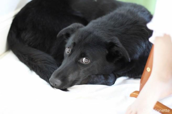 10.23.15. Dog Pee. Riley