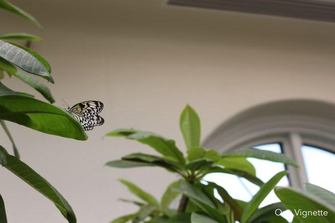 9.6.16. Mr. Sprinkles. Butterfly 1