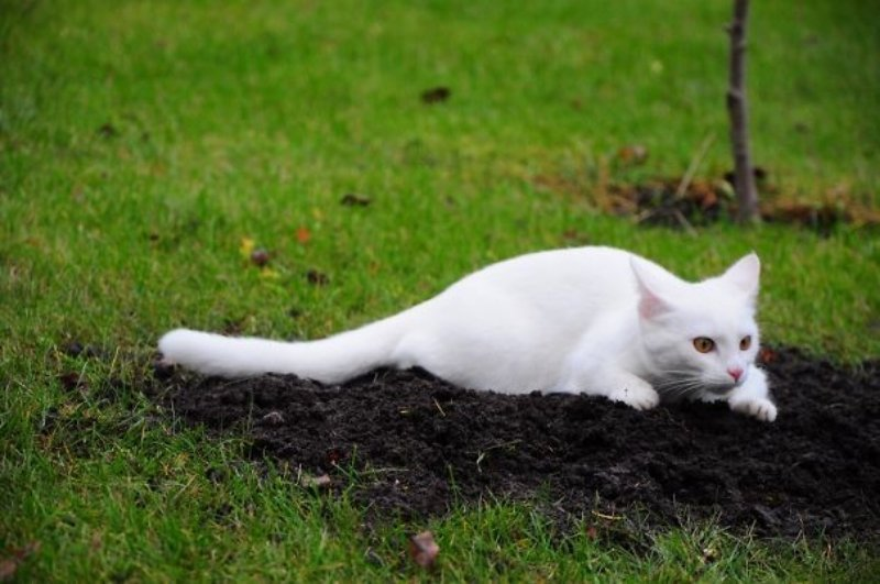 20-hilarious-photos-proving-cats-want-humans-dead-2