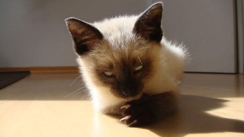 20-hilarious-photos-proving-cats-want-humans-dead-5