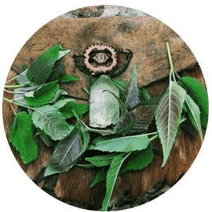 19_IntuitivePlantMedicine_Immersion