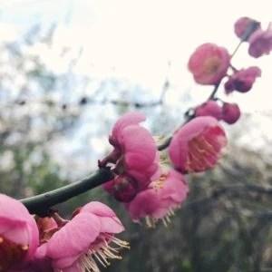 Blossom-branch-spring