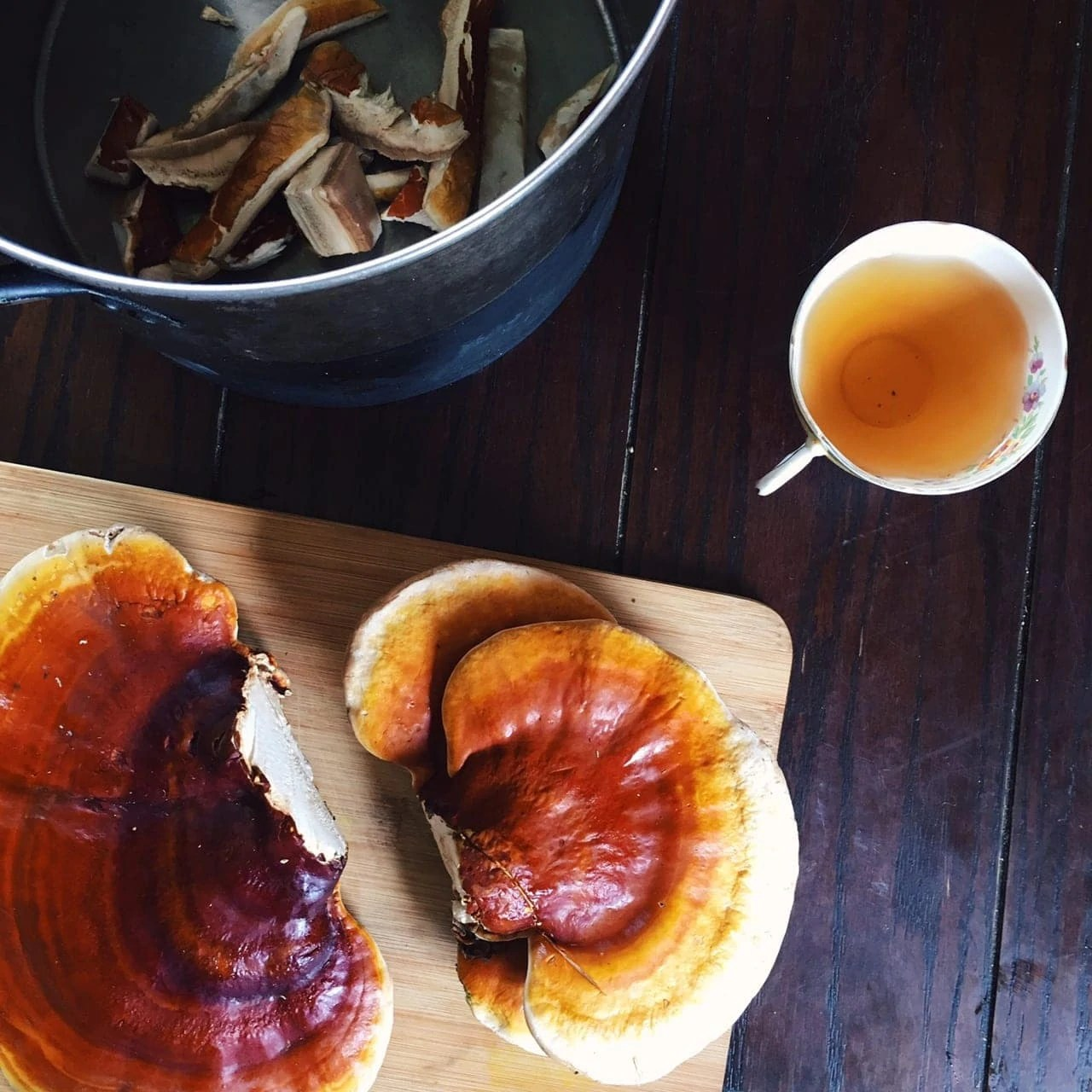 Reishi: A Psychedelic of the Unseen - One Willow Apothecaries