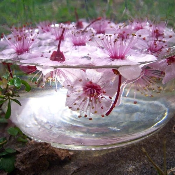 flower essences online