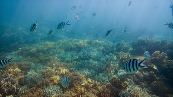 Fish and coral in Dumbell Island in the Whitsunday Islands.