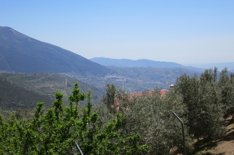 Mittlere Höhe - Obst- und Olivenbäume