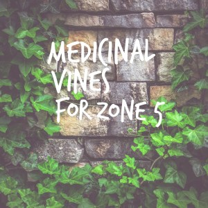 Medicinal Vines for Zone 5