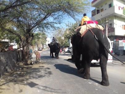 Auf Indiens Strassen tummelt sich alles was Beine oder Räder hat.