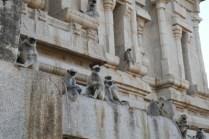 Am Tempeleingang sollte man keine Bananen offen am Rucksack tragen, die bleiben dort nicht lange.