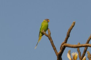 Klasse Vogelwelt Indiens.