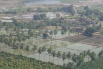 Die Reisfelder Hampis vom Tempelberg Anjana Matha aufgenommen.