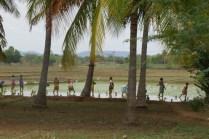 Arbeitsintensive Landwirtschaft: Frauen beim Reispflanzen. Getreideernte vielerorts per Handsichel.