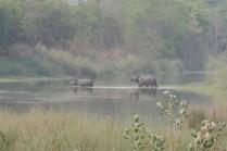 Zwei der 645 Nashörner in Nepals Nationalparks