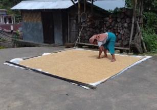 Nagaland: Reistrocknung auf der Dorfstrasse.
