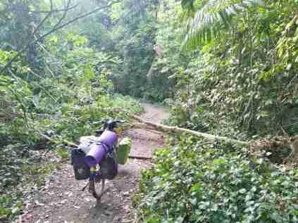 Durch den MTB-Park geht es vom Grenzübergang Richtung Zentrum. Immer wieder wird von den sicherheitsverliebten Singapurern vor herunterfallenden Ästen gewarnt... :-)