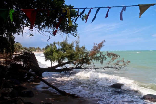 Another 40-year-old tree was lost to coastal erosion in Loiza., evidence of a wider beach in years past.(Janice Cantieri/MEDILL)