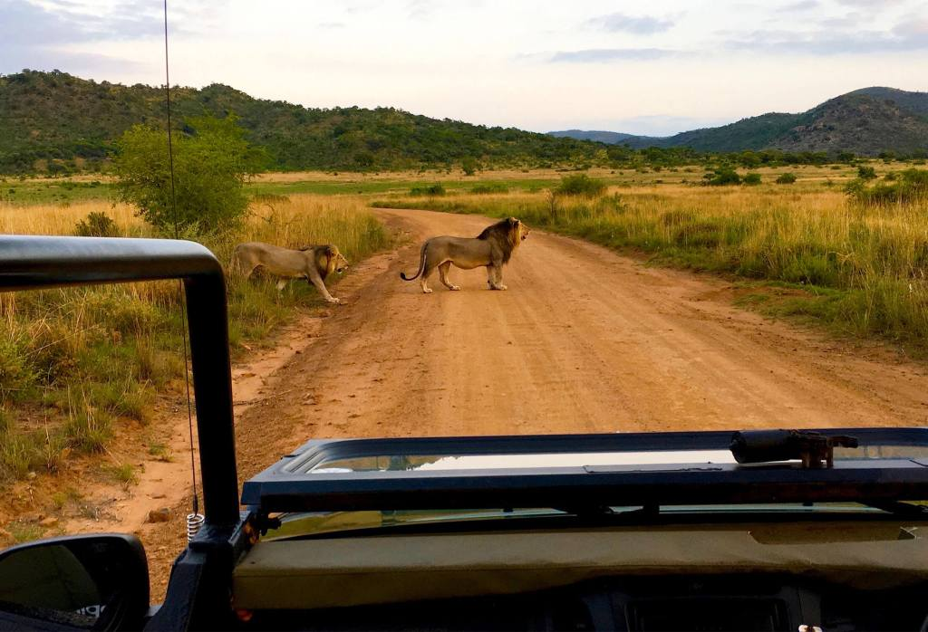 15 Things You Must Know Before Going on Safari in South Africa