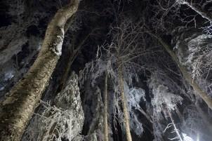 hubbard brook, ice storm, new hampshire