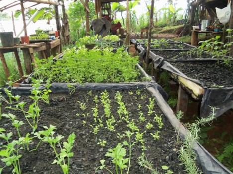 Hidroponia. Seedlings growing only in coal.