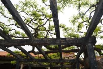 Garden in the Forbidden City