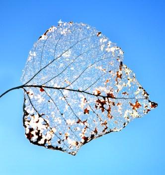 leaf_0777