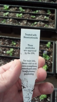 Plant tag from a major store indicating the use of neonicitinoid insecticides.