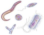 parasites image