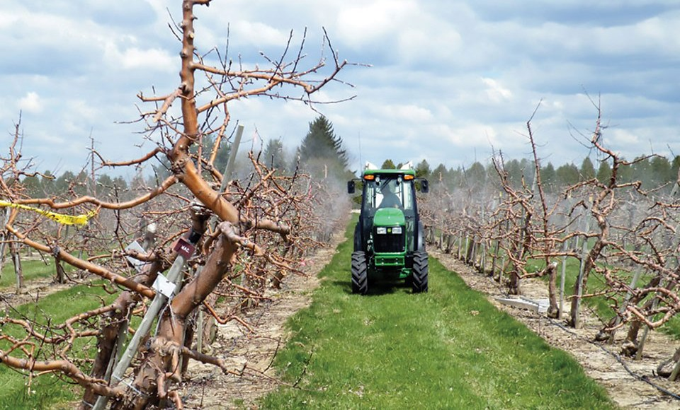 Picture of airblast sprayer driving down alley of apple orchard at bud break in spring