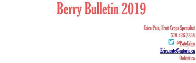 2019 blog title