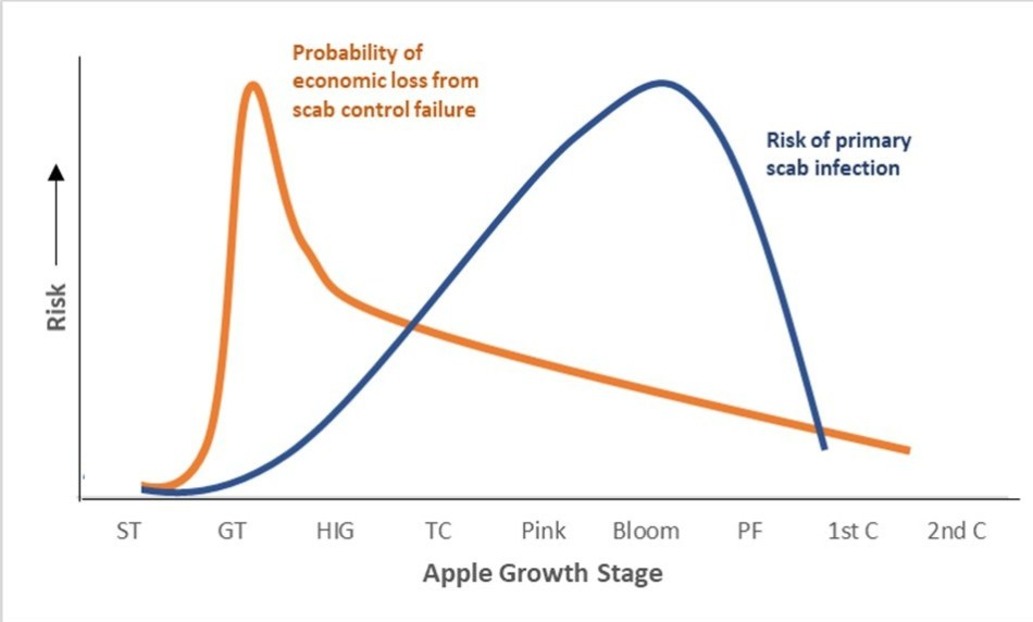 Graphic of economic loss potential from apple scab. Risk of primary scab infection peaks over bloom while the probability of economic loss from scab control failure is highest from green tip to half inch green growth stage.