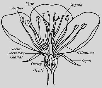 Figure 2. Anatomy of an Apple Bloom